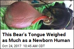 Finally, Relief for Bear With an 'Astonishing' Tongue