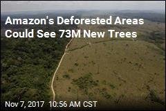 Brazil Begins 'World's Largest Tropical Reforestation' Effort