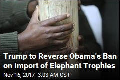 Shot an Elephant in 2016? Trump Will Let You Import It