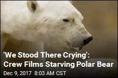 Wrenching Video Shows Starving Polar Bear