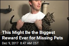 Find These Missing Cats, and Become Bitcoin Rich
