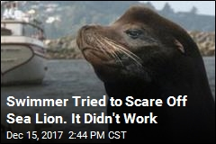 Swimmer Hospitalized After Sea Lion Attack