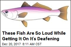 This Fish Sex Sounds Like 'a Really Loud Machine Gun'