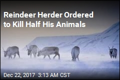 Norway Orders Reindeer Slaughter