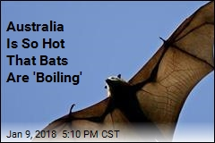 US Has Frozen Iguanas; Australia Has 'Boiling' Bats