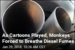 Humans, Monkeys Used in Diesel-Fumes Tests