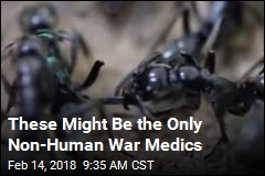 These Might Be the Only Non-Human War Medics