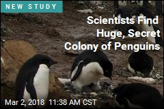 Secret Colony of Penguins Given Away by Own Poop