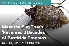 Meet the Bug That's 'Reversed 3 Decades' of Pesticide Progress