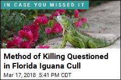 Scientists Are Bashing Iguanas' Heads in Florida