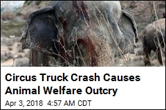 Circus Truck Crash Kills 1 Elephant, Injures 4