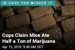 Cops Claim Mice Ate Half a Ton of Marijuana