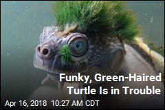 This Funky Turtle Could Use Your Help