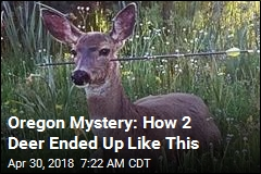 In Oregon, 2 Live Deer With Arrows Shot Through Them