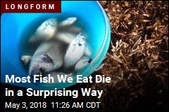 There's a Better, Tastier Way for Fish to Die