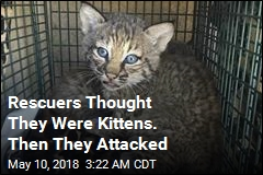 Rescuers Bitten After Mistaking Bobcat for Kittens