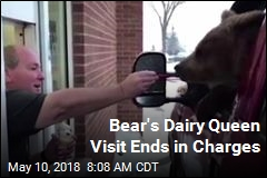Bear's Dairy Queen Visit Ends in Charges