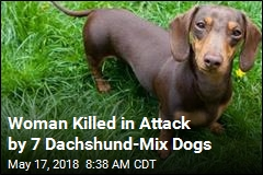 Woman Killed in Attack by 7 Dachshunds