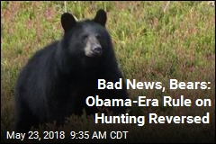 Good News for Alaska Hunters Is Bad News for Bears