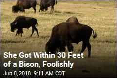 She Got Within 30 Feet of a Bison, Foolishly