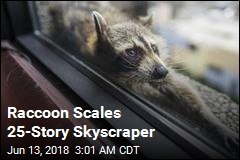 Raccoon Scales 25-Story Skyscraper