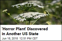 'Horror Plant' Discovered in Another US State