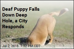 Deaf Puppy Falls Down Deep Hole, a City Responds