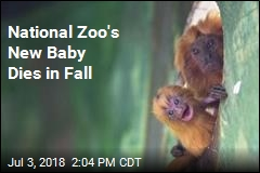 National Zoo's New Baby Dies in Fall