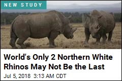 World's First 'Test Tube Rhinos' Could Save a Species