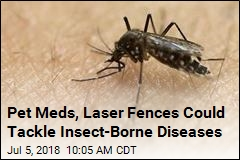 Pet Meds, Laser Fences Could Tackle Insect-Borne Diseases