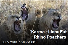 'Karma': Lions Eat Rhino Poachers