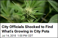 Pranksters Plant Something Unexpected in City Pots