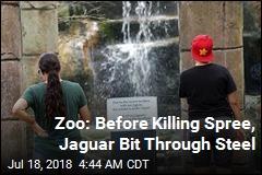 Zoo: Before Killing Spree, Jaguar Bit Through Steel