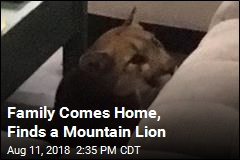 Mountain Lion Breaks Into Family's Home