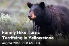 Bear Spray Saves 10-Year-Old Attacked in Yellowstone