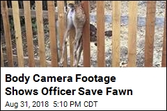 Body Camera Footage Shows Officer Save Fawn