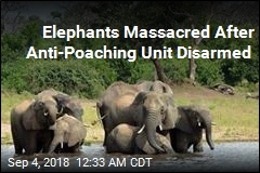Elephants Massacred After Anti-Poaching Unit Disarmed