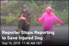 Reporter Stops Reporting to Save Injured Dog