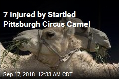 Startled Camel Injures 7 at Pittsburgh Circus