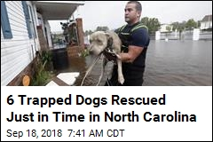 Video: 6 Trapped Dogs Saved From Rising Water
