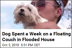 Dog Spent a Week on a Floating Couch in Flooded House