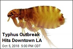 Typhus Outbreak Hits Downtown LA