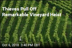 Thieves Steal Entire Vineyard Worth of Grapes