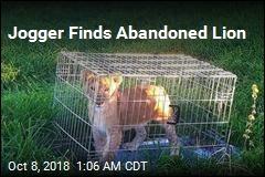 Dutch Jogger Finds Lion Cub