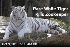 Rare White Tiger Kills Zookeeper