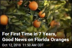For First Time in 7 Years, Good News on Florida Oranges