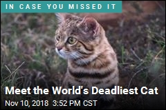 Meet the World's Deadliest Cat