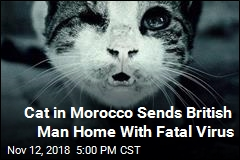 Rabies Kills Man Bitten by Cat While Overseas