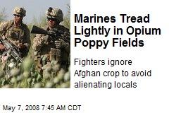 Marines Tread Lightly in Opium Poppy Fields