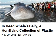 In Dead Whale's Belly, a Horrifying Collection of Plastic